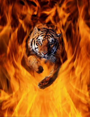 http://catcatcat.narod.ru/tigerbl.jpg